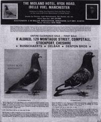 Pigeon sale ad